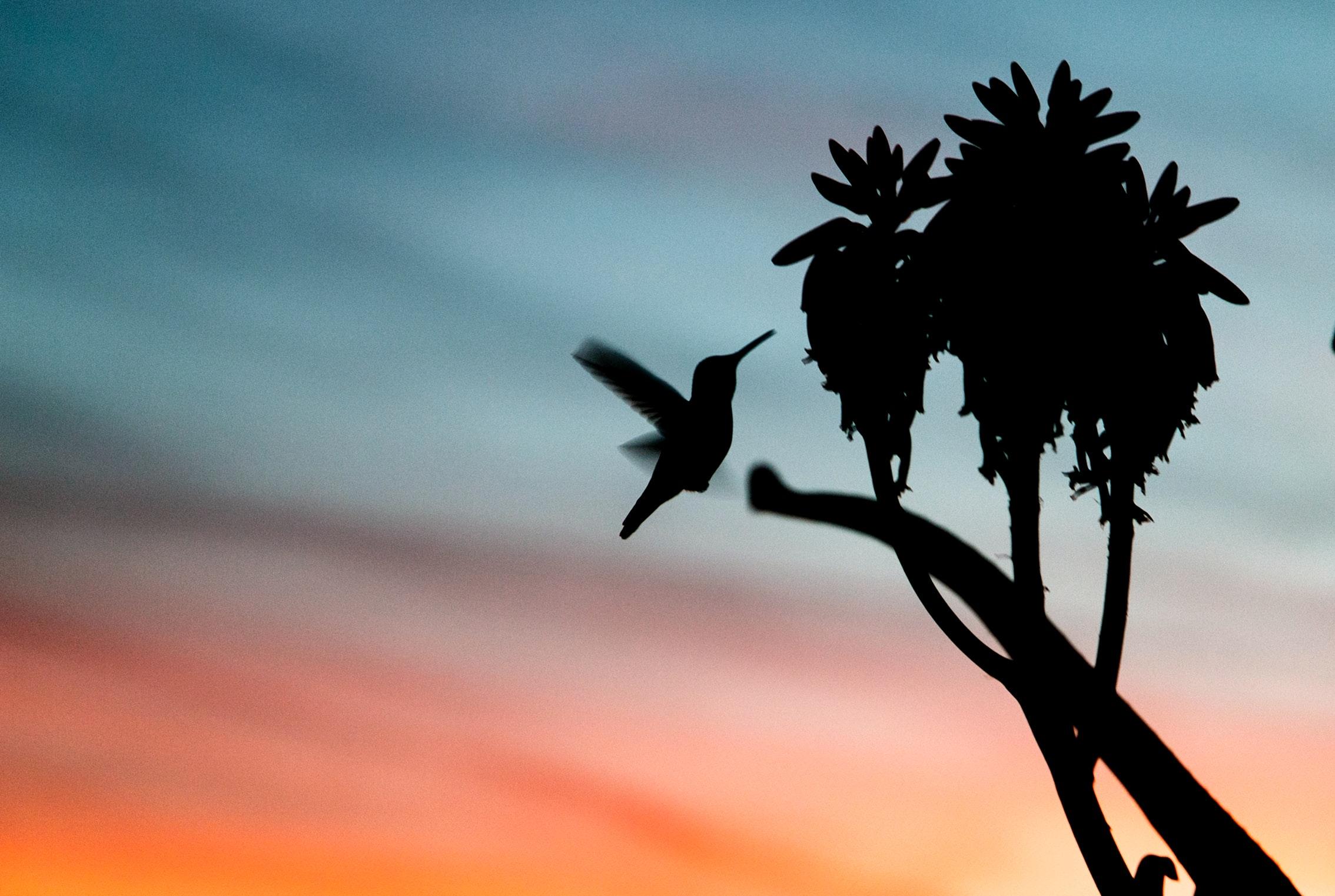 Mi leyenda del colibrí